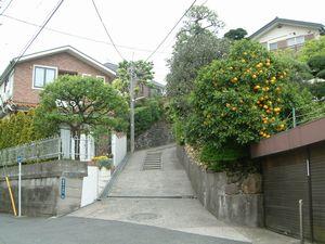20070428-1.jpg